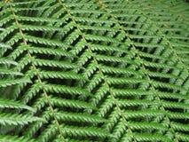 Fern leaf texture nature background. Green fern leaf textured nature background Stock Photos