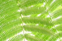 Fern Leaf Stock Images