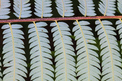 Fern leaf texture Stock Photography