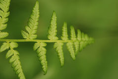 Fern leaf to infinity. Optical effect, fern leaf going to infinity Stock Image