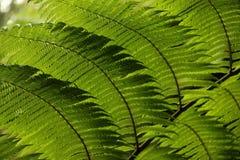 Fern Leaf Stock Photography