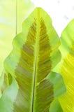 Fern leaf. Under the sun light Royalty Free Stock Image