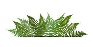 Fern Leaf Vector Background avec l'illustration blanche de cadre Photographie stock libre de droits