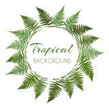 Fern Leaf Vector Background avec l'illustration blanche de cadre Image stock