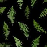 Fern Leaf Vector Background Illustration Photo libre de droits