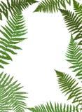 Fern Leaf Vector Background Illustration Images libres de droits