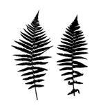 Fern Leaf Vector Background Illustration Photos libres de droits