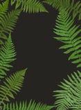 Fern Leaf Vector Background Illustration Fotografia Stock Libera da Diritti