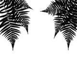 Fern Leaf Vector Background Illustration Fotografia Stock