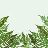 Fern Leaf Vector Background Illustration. EPS10 Royalty Free Stock Images