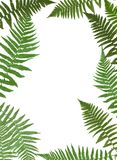 Fern Leaf Vector Background Illustration. EPS10 Royalty Free Stock Images