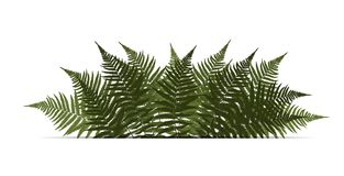 Fern Leaf Vector Background Illustration Royalty Free Stock Photo