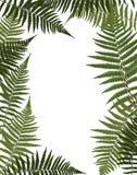Fern Leaf Vector Background Illustration. Fern Leaf Vector on White Background Illustration EPS10 Royalty Free Stock Photo