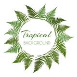 Fern Leaf Vector Background  with White Frame Illustration. EPS10 Stock Image