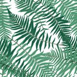 Fern Leaf Vector Fern Leaf Vector Seamless Pattern Background   Royalty Free Stock Photography