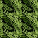 Fern Leaf Vector Fern Leaf Vector Seamless Pattern Background   Stock Photos