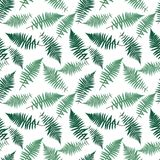 Fern Leaf Vector Fern Leaf Vector Seamless Pattern Background. Fern Leaf Vector Fern Leaf Vector Seamless Pattern Background Illustration  EPS10 Stock Photos