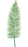 Fern leaf. Vector illustration of fern leaf on white background Stock Image