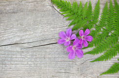 Fern leaf and violet flowers on the old wood Royalty Free Stock Image