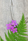 Fern leaf and violet flowers on the old wood Stock Photo