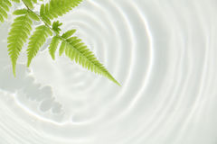 Fern leaf and water ripple background  2 Stock Images