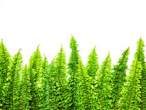Fern leaf on white background Royalty Free Stock Image