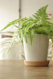 Fern leaf in white pot on the table