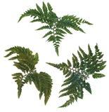 Fern leafs Stock Photos