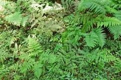 Fern leafs Stock Image