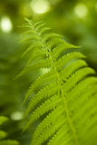 Fern leave Stock Photo