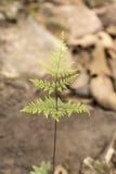 Fern Leave i en skog Arkivfoton