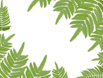 Fern leave vector background Stock Photos