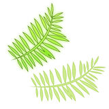 Fern leaves Stock Image