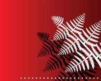 Fern leaves. Vector fern leaves on red background Stock Image