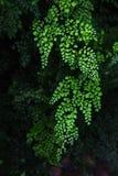 Fern Leaves stock fotografie