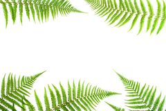 Fern leaves. Fern border, white white space for text Royalty Free Stock Photos