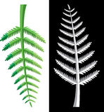 Fern leaves. Design of colorful fern leaves, vector Stock Photography