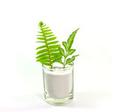 Fern leaves. Two types of ferns in glass royalty free stock photos
