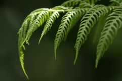 Fern Leaves Stock Photo