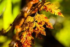 Fern Leaves Fotografia Stock Libera da Diritti
