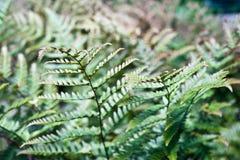 Fern Leaves Images libres de droits