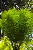 Fern Leaves Fotos de Stock Royalty Free