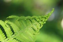 Fern Leaves Stock Foto
