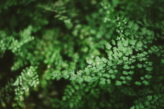 Fern Leaves Photo stock