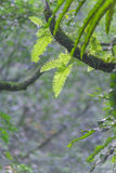 Fern Leaves Stockbild