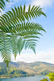 Fern leaves Royalty Free Stock Images