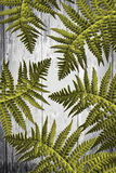 Fern leaves on artistic wooden background. Green Fern leaves on artistic wooden background Stock Photo