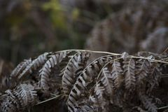 Fern Leaves In Autumn royalty free stock images