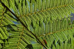 Fern leaves background Stock Images