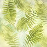 Fern Leaves Background Royalty Free Stock Photos